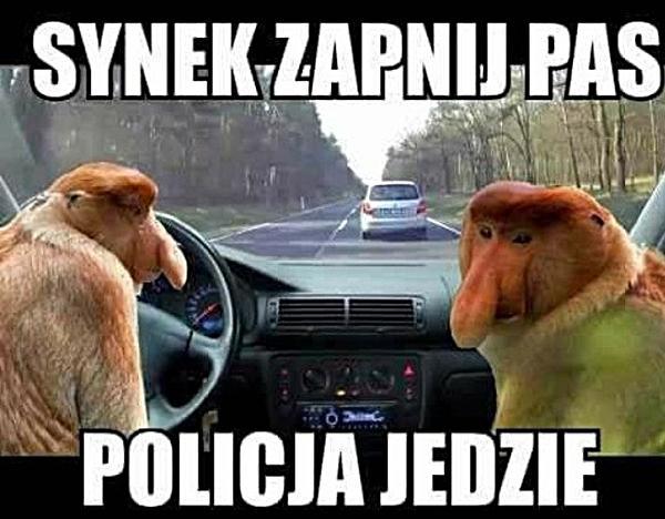 Synek zapnij pas, policja jedzie