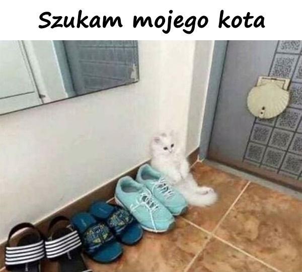 Szukam mojego kota