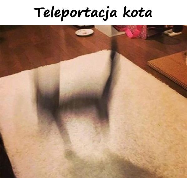 Teleportacja kota