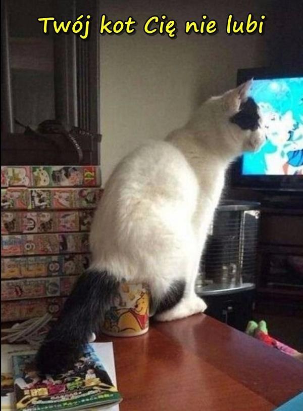 Twój kot Cię nie lubi