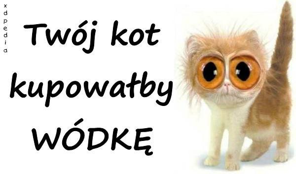 Twój kot kupowałby WÓDKĘ Tagi: kwejk, kot, wódka, kociak, memy, reklama, kotek, picie, dobro, mem, wybory, besty.