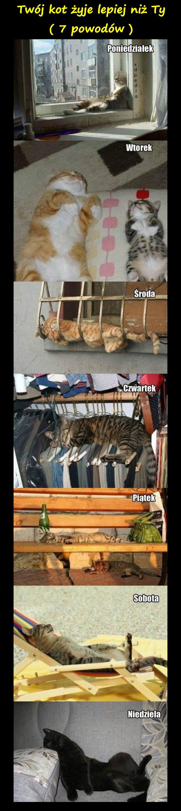 Mem Humor Memy Koty Besty Kotki śmieszne Obrazki Kwejk