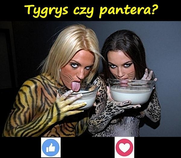 Tygrys czy pantera?