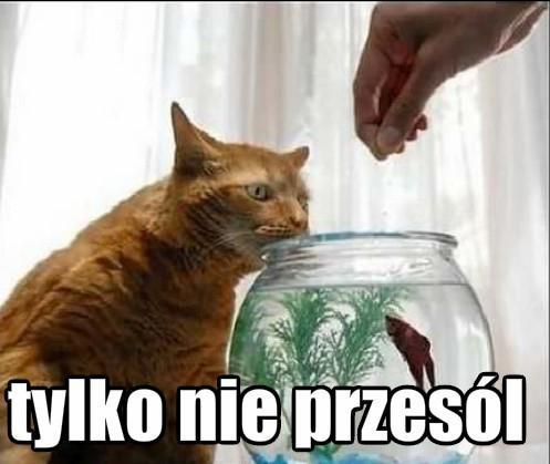 Kot: Tylko nie przesól mojej rybki!