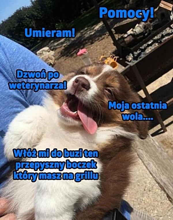 Umierający pies