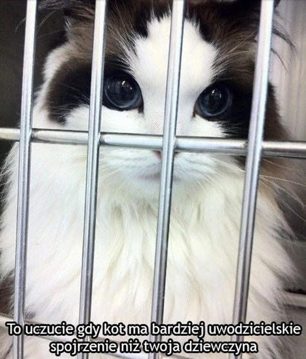 To uczucie gdy kot ma bardziej uwodzicielskie spojrzenie niż twoja dziewczyna.