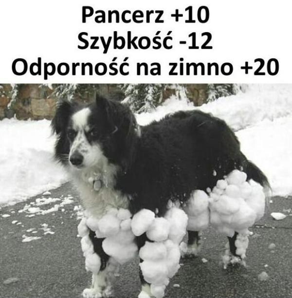 Uzbrojony pies: pancerz, szybkość, odporność na zimno
