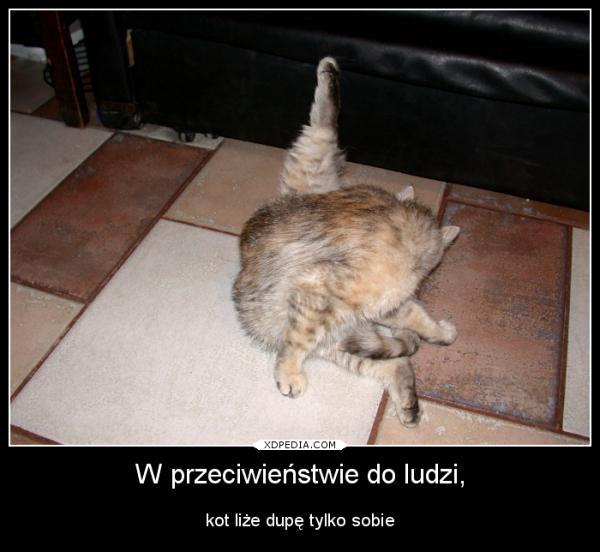 W przeciwieństwie do ludzi, kot liże dupę tylko sobie