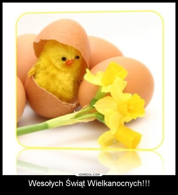 Wesołych Świąt Wielkanocnych!!! Tagi: demotywator, wielkanoc, życzenia.