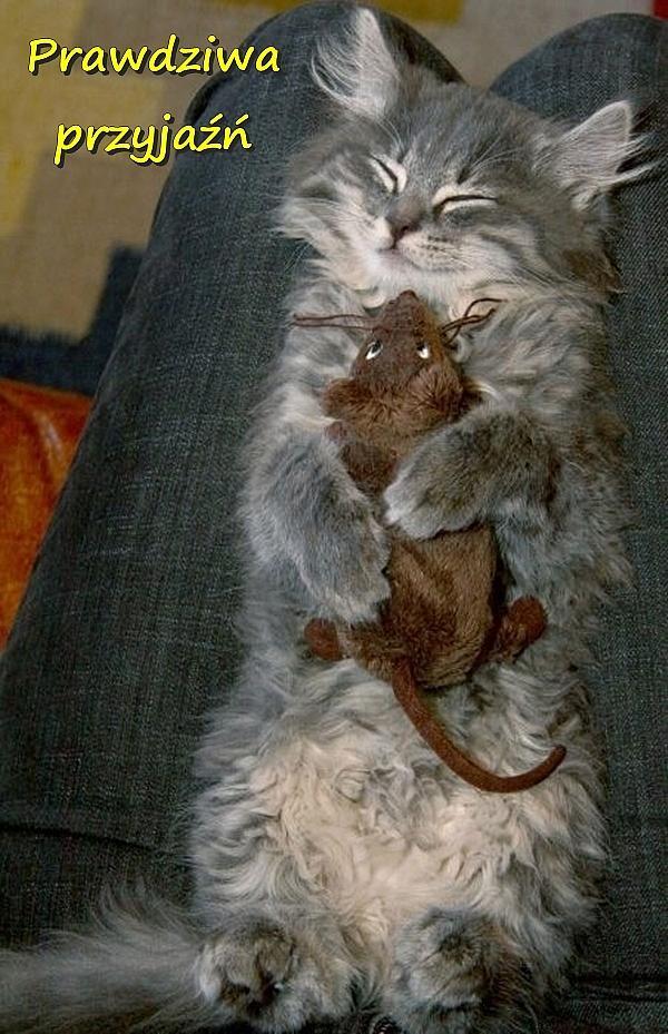 Słodziaki Cytat Koteł Przyjaciółka Mem Cytaty Kociak Mysz