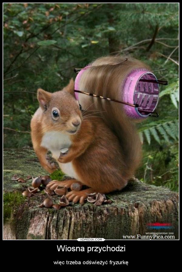 Wiosna przychodzi więc trzeba odświeżyć fryzurkę. Tagi: demotywator, wiosna, fryzurka, wiewiórka.