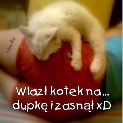 Wlazł kotek na... dupkę i zasnął xD