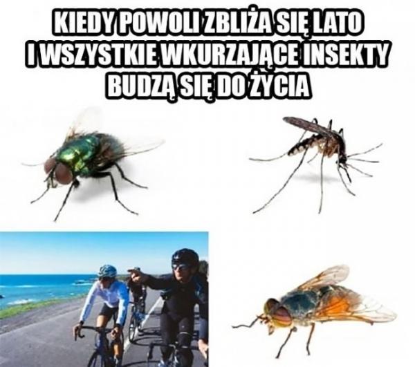 Kiedy powoli zbliża się lato i wszystkie wkurzające insekty budzą się do życia