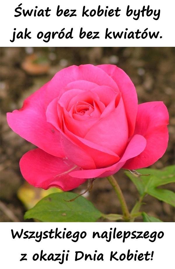 Świat bez kobiet byłby jak ogród bez kwiatów. Wszystkiego najlepszego z okazji Dnia Kobiet!