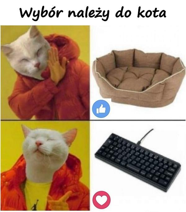 Wybór należy do kota