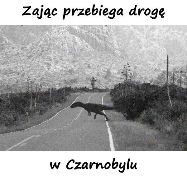 Zając przebiega drogę w Czarnobylu