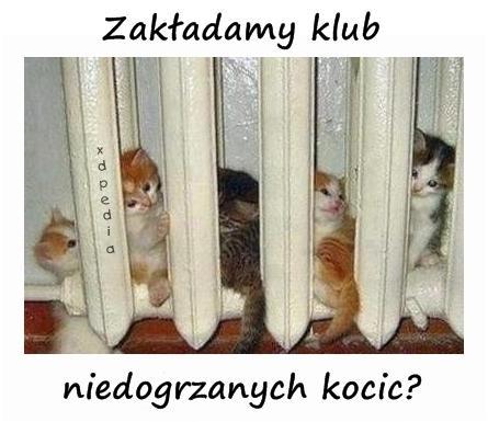 Zakładamy klub niedogrzanych kocic?