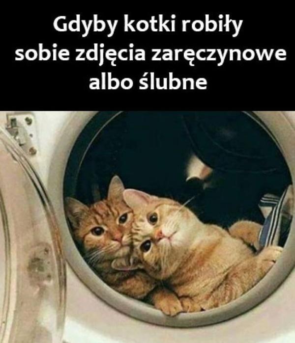 Gdyby kotki robiły sobie zdjęcia zaręczynowe albo ślubne.