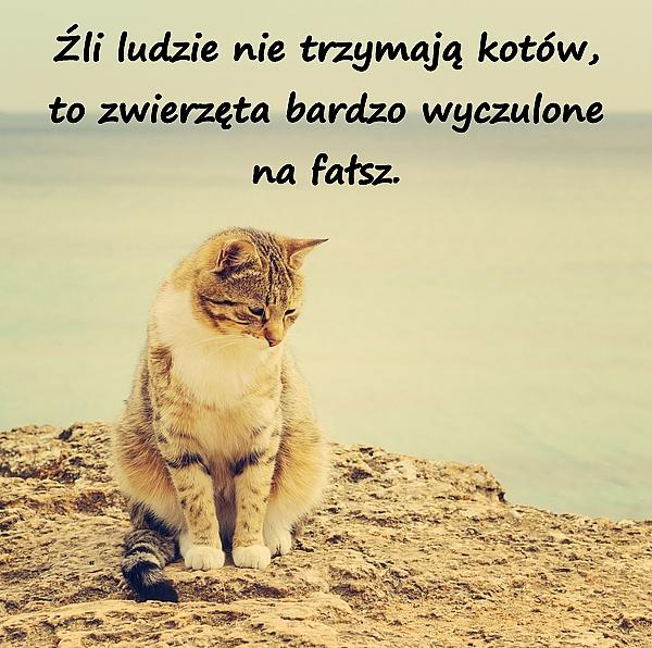 Źli ludzie nie trzymają kotów, to zwierzęta bardzo wyczulone na fałsz.