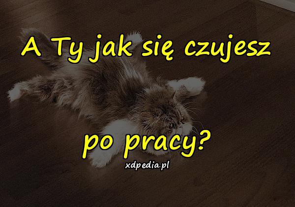 Po Pracy śmieszne Obrazki Po Pracy Memy Kot Kociak Xdpedia