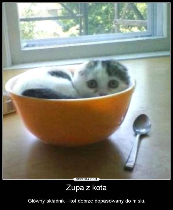 Główny składnik - kot dobrze dopasowany do miski.