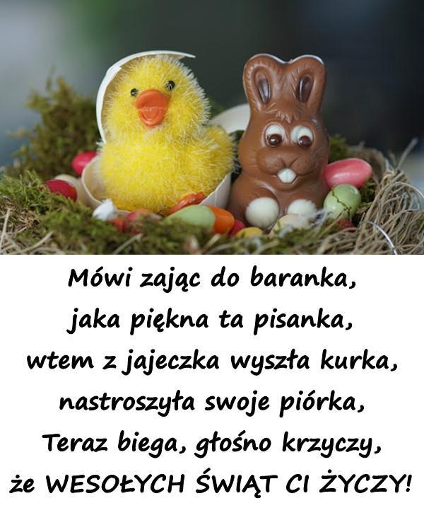 Mówi zając do baranka, jaka piękna ta pisanka, wtem z jajeczka wyszła kurka, nastroszyła swoje piórka, Teraz biega, głośno krzyczy, że WESOŁYCH ŚWIĄT CI ŻYCZY!